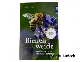 Bienenweide Bild